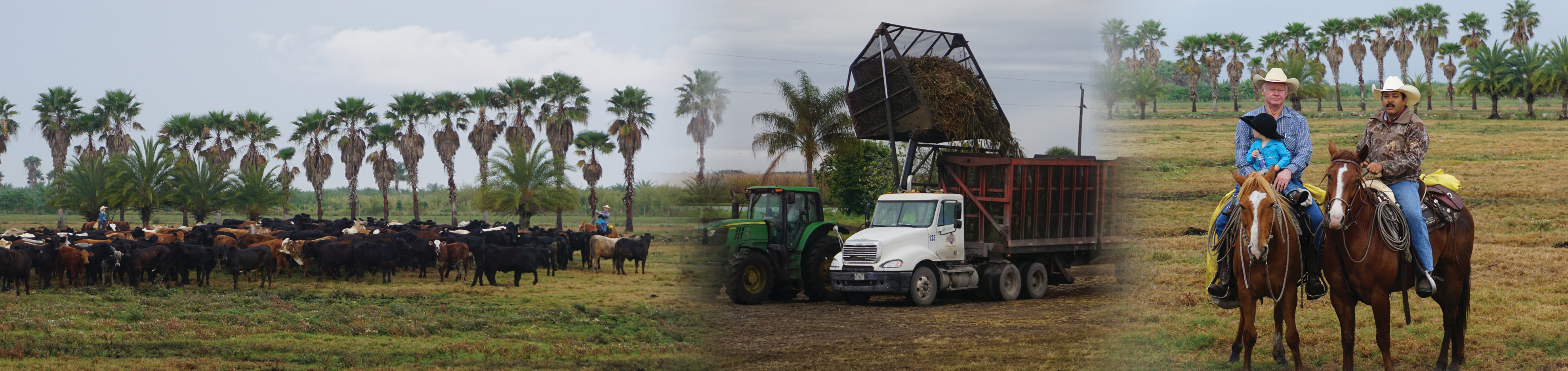 Agribusiness Minor