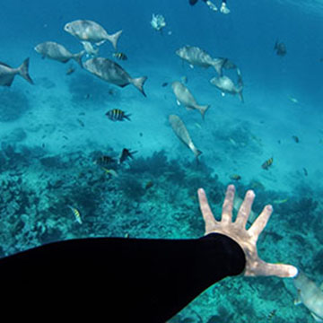Marine & Ecological Sciences