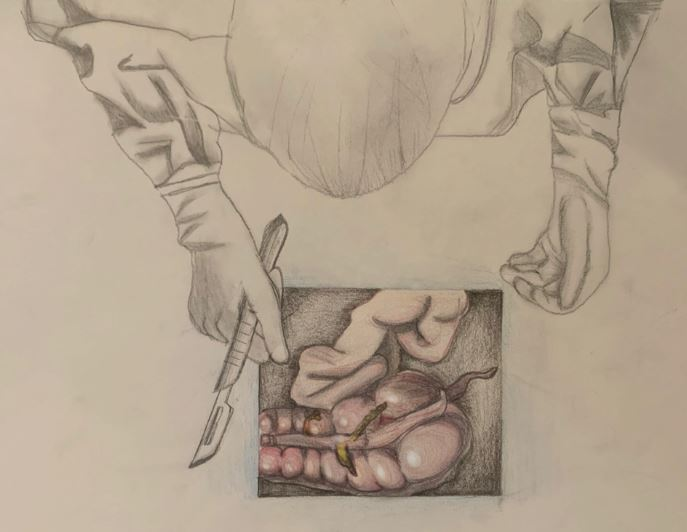 Dr. Weiss has Continued Success with her Medical Illustration Students