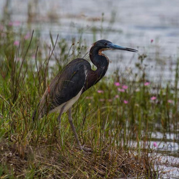 bird on waterfront