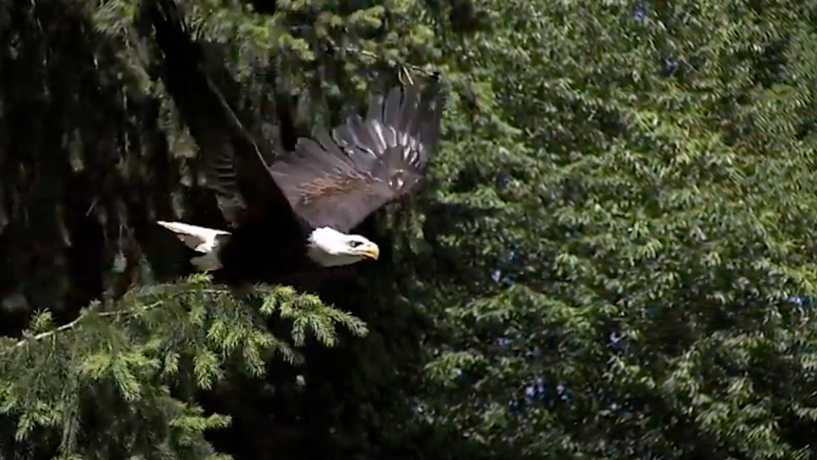 We are Eagles video thumbnail