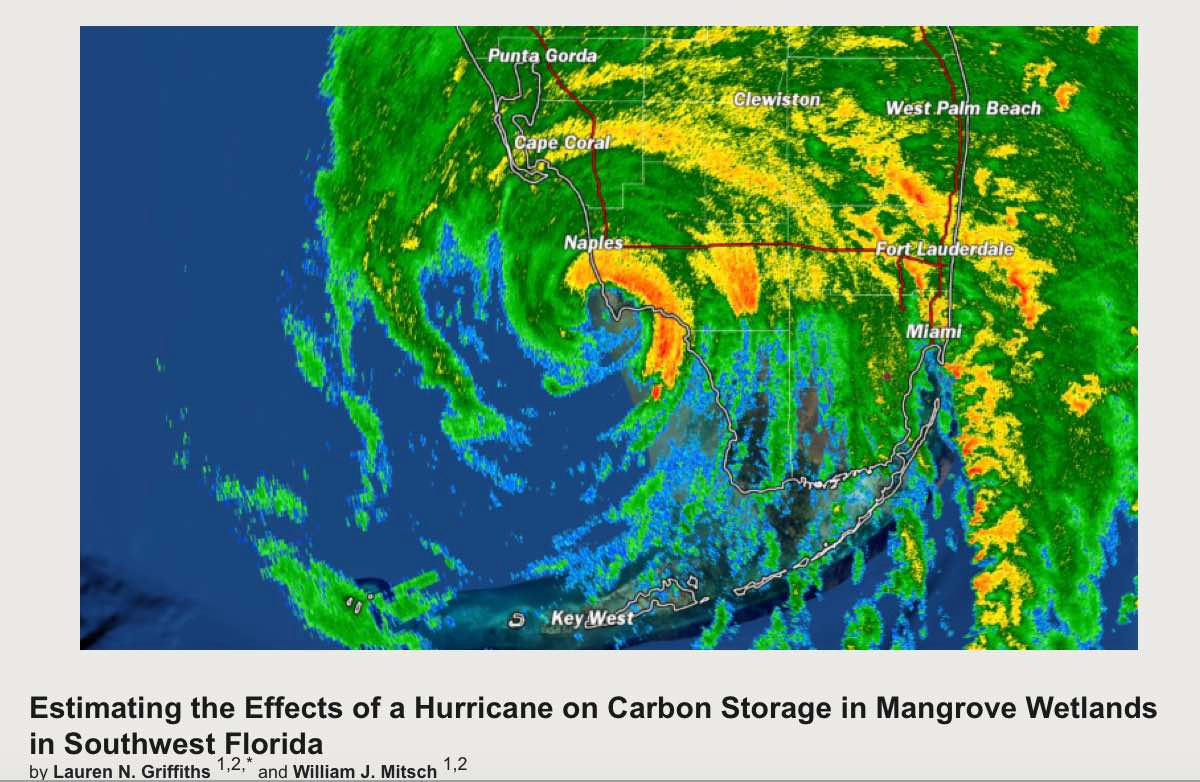 Estimating the Effects of a Hurricane on Carbon Storage in Mangrove Wetlands