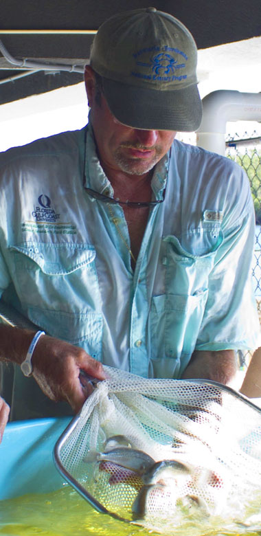 Photo of researcher testing fish in holding tank.