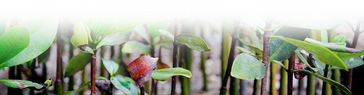 Decorative mangrove image