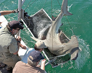 Photo of shark research